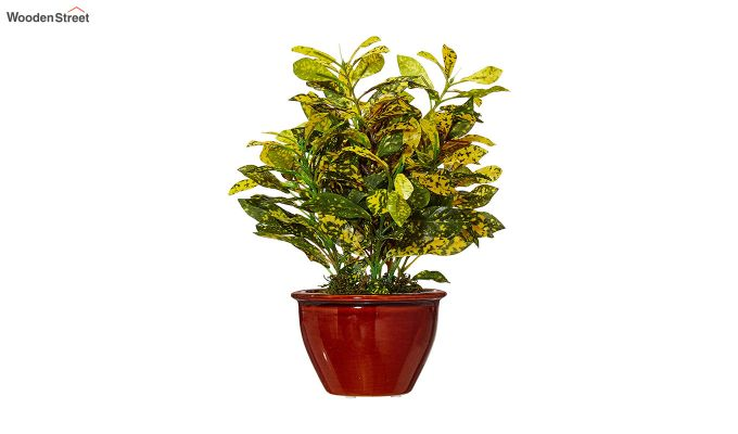 Artificial Bonsai Croton Plant with Ceramic Pot-1