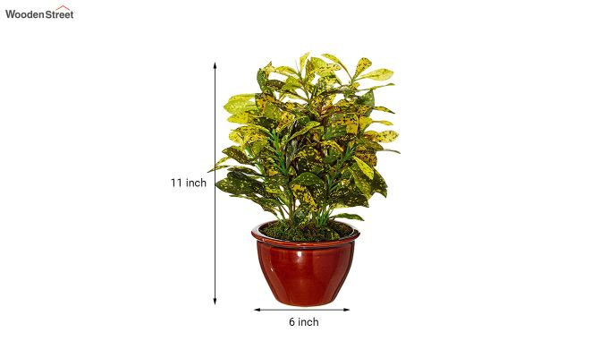 Artificial Bonsai Croton Plant with Ceramic Pot-4