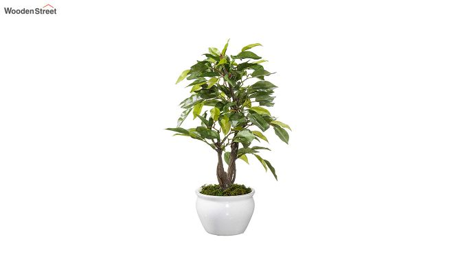 Artificial Ficus Bonsai Plant With Pot-1