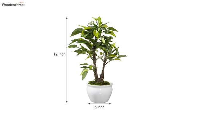 Artificial Ficus Bonsai Plant With Pot-4
