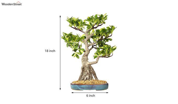 Artificial Schefflera Bonsai Plant With Pot-3