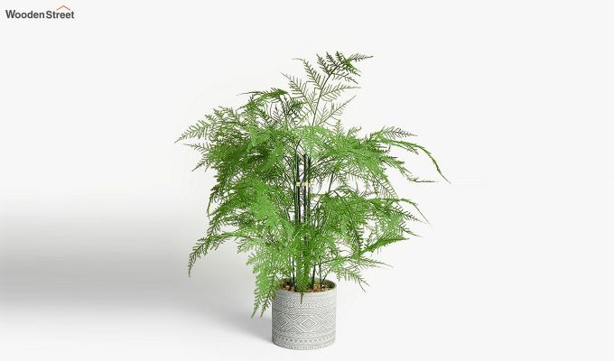 Artificial Greenery Fern Setose Plant With Pot-1