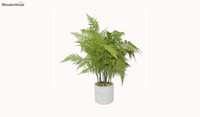 Artificial Greenery Fern Setose Plant With Pot-2