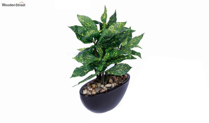 Artificial Green Croton Bonsai Plant With Ceramic Pot-2