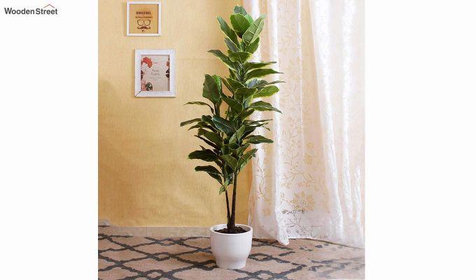 Decorative Artificial Rubber Plant-1