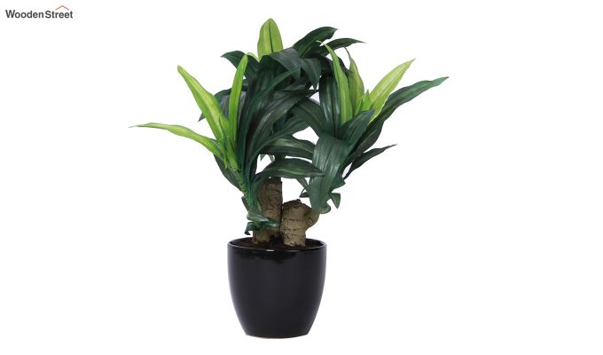 Green Polyester Dracaena Bonsai with Ceramic Pot-2