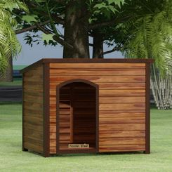 Gucci Dog House (Honey Finish)