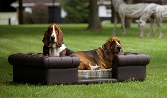 Lombard Dog Sofa Bed (Classic Brown)-2